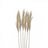 Inart Κλαδί/Φυτό Μπεζ ύψος 70cm 3-85-909-0002 | ΑΡΧΟΝΤΙΚΟ Home