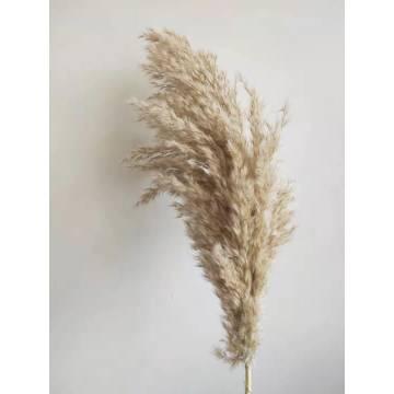 Διακοσμητικό Φυσικό Κλαδί Pampas Grass Natural Ecru Ύψος 80cm