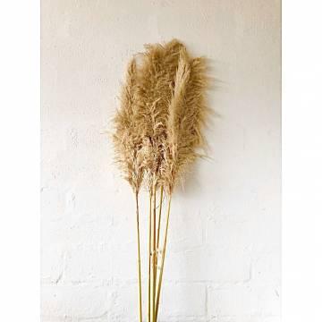Διακοσμητικό Φυσικό Κλαδί Pampas Grass Natural Gold Ύψος 85cm